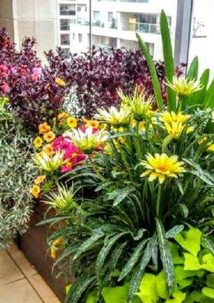 אדניות-איך-מגדלים-צמחים-בצורה-נכונה