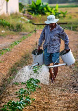 השקיה-בתלמים